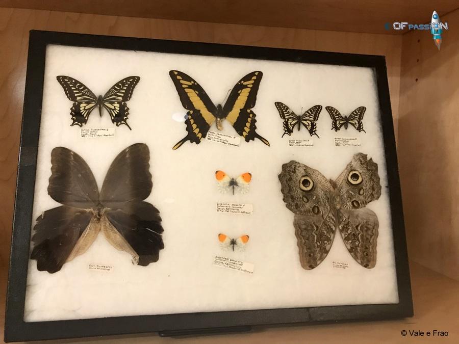 farfalle san francisco valeria cagnina francesco baldassarre california ofpassion